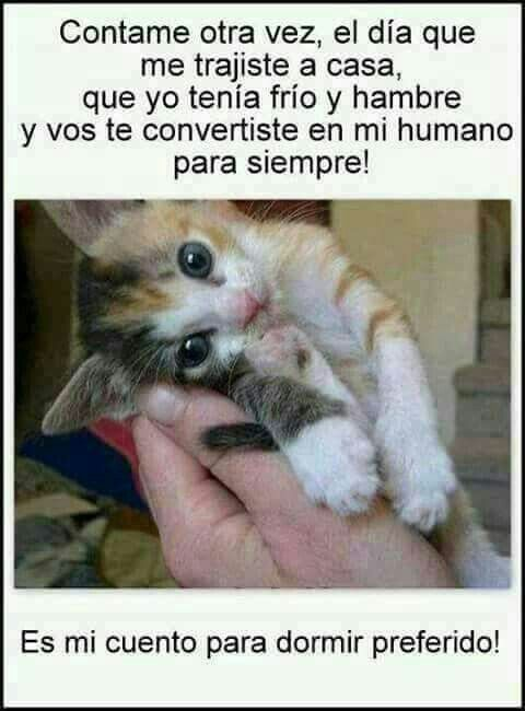 Pin De Dulce R S En Free Gatitos Divertidos Gatos Amo A Los Gatos