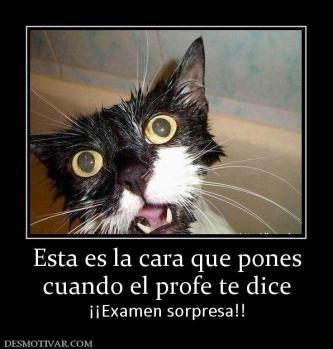 Desmotivaciones Cada Hora Los Mejores Carteles Spanish Memes Spanish Humor Funny Memes