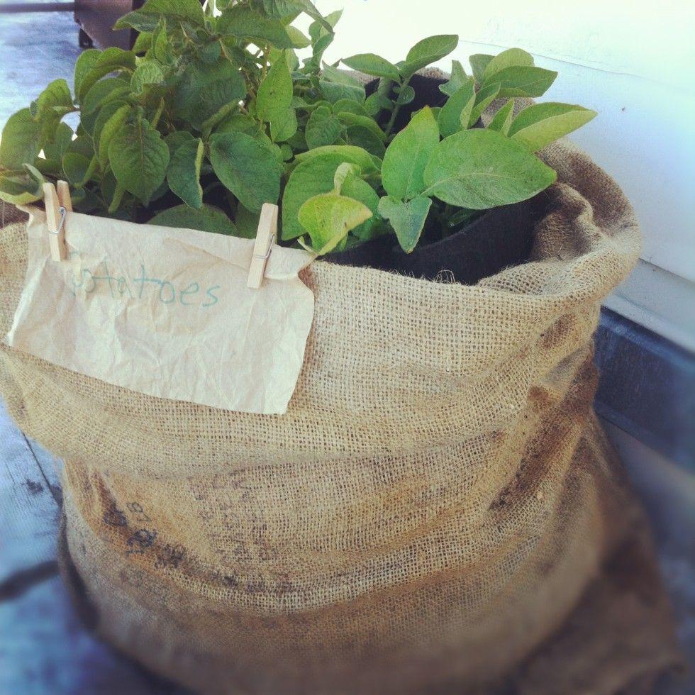 kartoffeln auf dem balkon technologie garden spaces grow bags und perfect plants. Black Bedroom Furniture Sets. Home Design Ideas