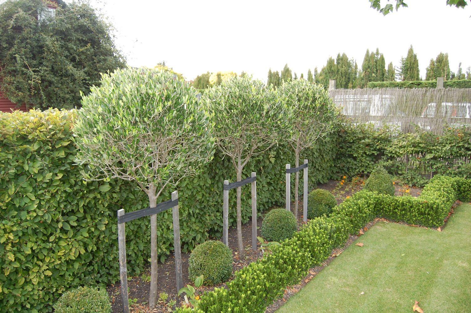 Formal Garden Nz 12 Jpg 1 504 1 000 Pixels Olive Trees Landscape