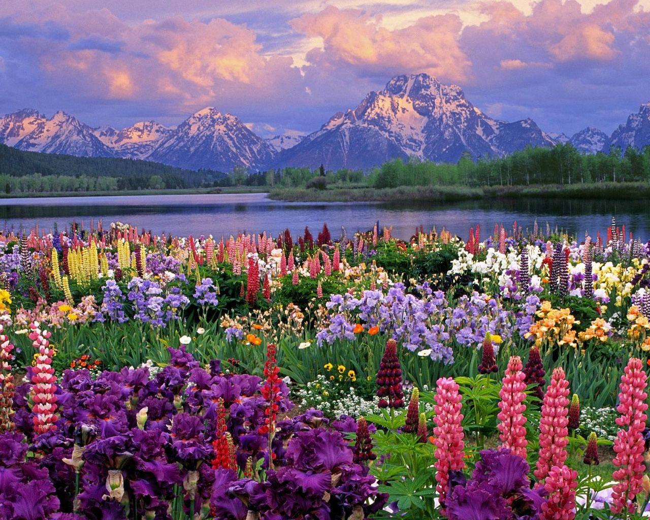 Spring Mountain Landscape Paisajes Flores Fotos De Paisajes Naturales Fotos De Paisajes