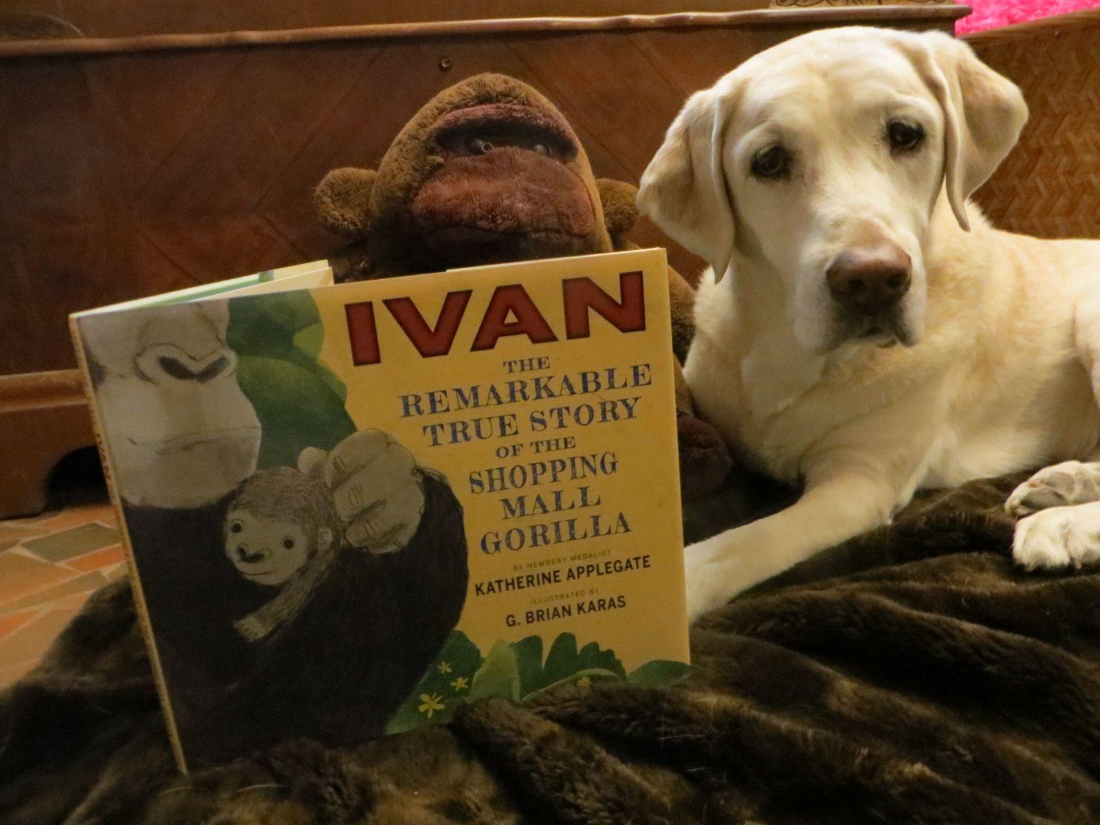 Ivan picture book true stories popular books