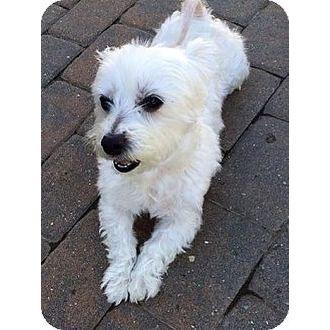 Shelly Saving Paws Rescue Inc Port Chester New York Pets Overstock Com Dog Adoption Pets Paws Rescue
