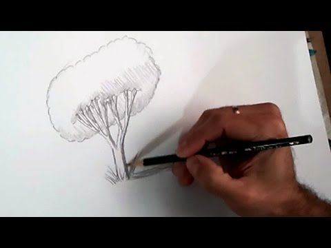Teaching kids to draw a realistic tree step by step how to draw a tree