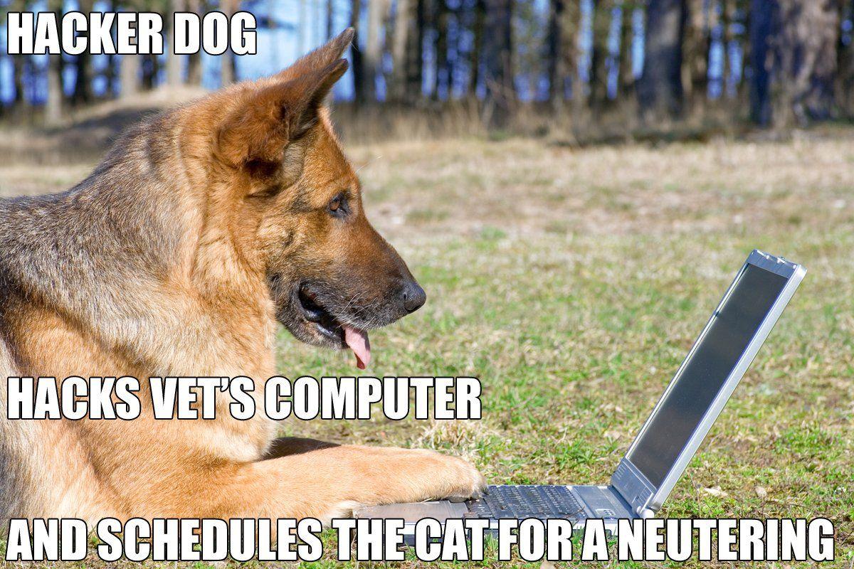 Insanely Hilarious Dog Memes Tamil Dog Memes Dogs
