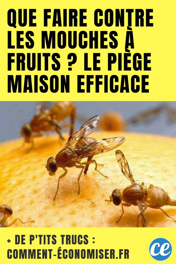 Remede De Grand Mere Contre Les Moucherons Dans La Maison que faire contre les mouches à fruits ? le piège maison