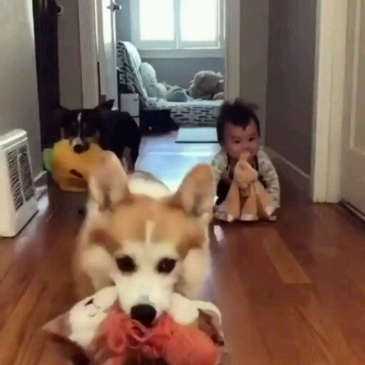 Latest Funny Babies Lol..Who is teaching who Please follow me for more! -funny dogs-funny babies 2