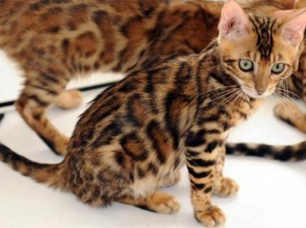cat feller bunchers