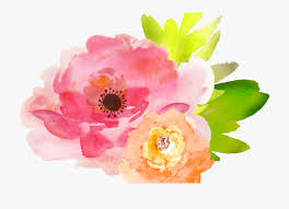 watercolor flowers transparent background , Google Search