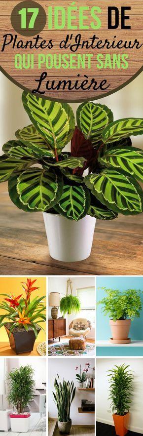17 Idees De Plantes Qui Poussent Sans Lumiere Du Soleil Plante