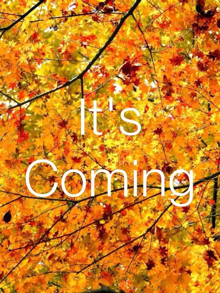 Fall, its coming quotes quote autumn fall hello fall fall ...