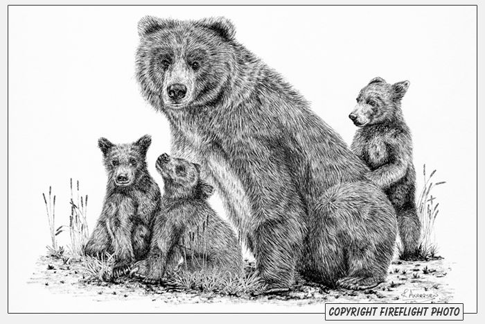 Grizzly Bear Drawings Realistic Grizzly Bear Drawings