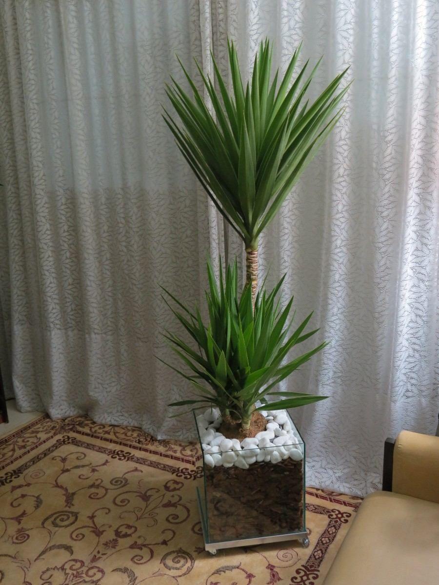 Yucca Separar Sala De Estar Da Sala De Jantar Uma Opcao E A