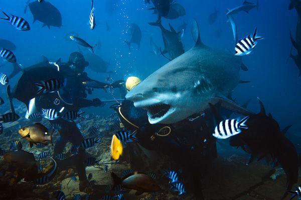 A different world~ Underwater Pinterest Underwater, Underwater - marine biologist job description