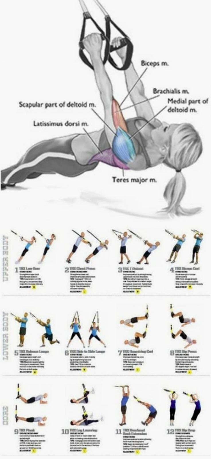 Weight Training Full Body Workout Trx Workouts Fitness Body