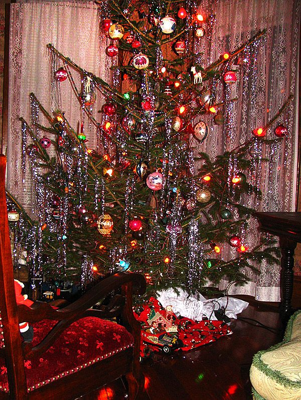 today there are many varieties of christmas trees including the