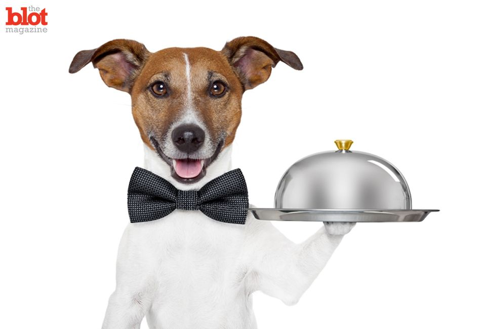 You know what holiday foods you need to avoid, but your pets don't. Dorri Olds shares 10 common seasonal foods that are the most dangerous to dogs and cats. http://theblot.com/10-holiday-foods-to-keep-away-from-dogs-cats-7729702