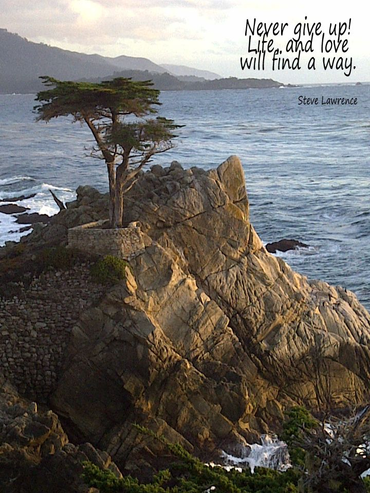 I Took This Picture On 17 Mile Drive Monterey California With My Phone Improbable Yes Impossible No Life Monterey California
