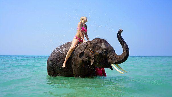 El Montar En Un Elefante, Baños