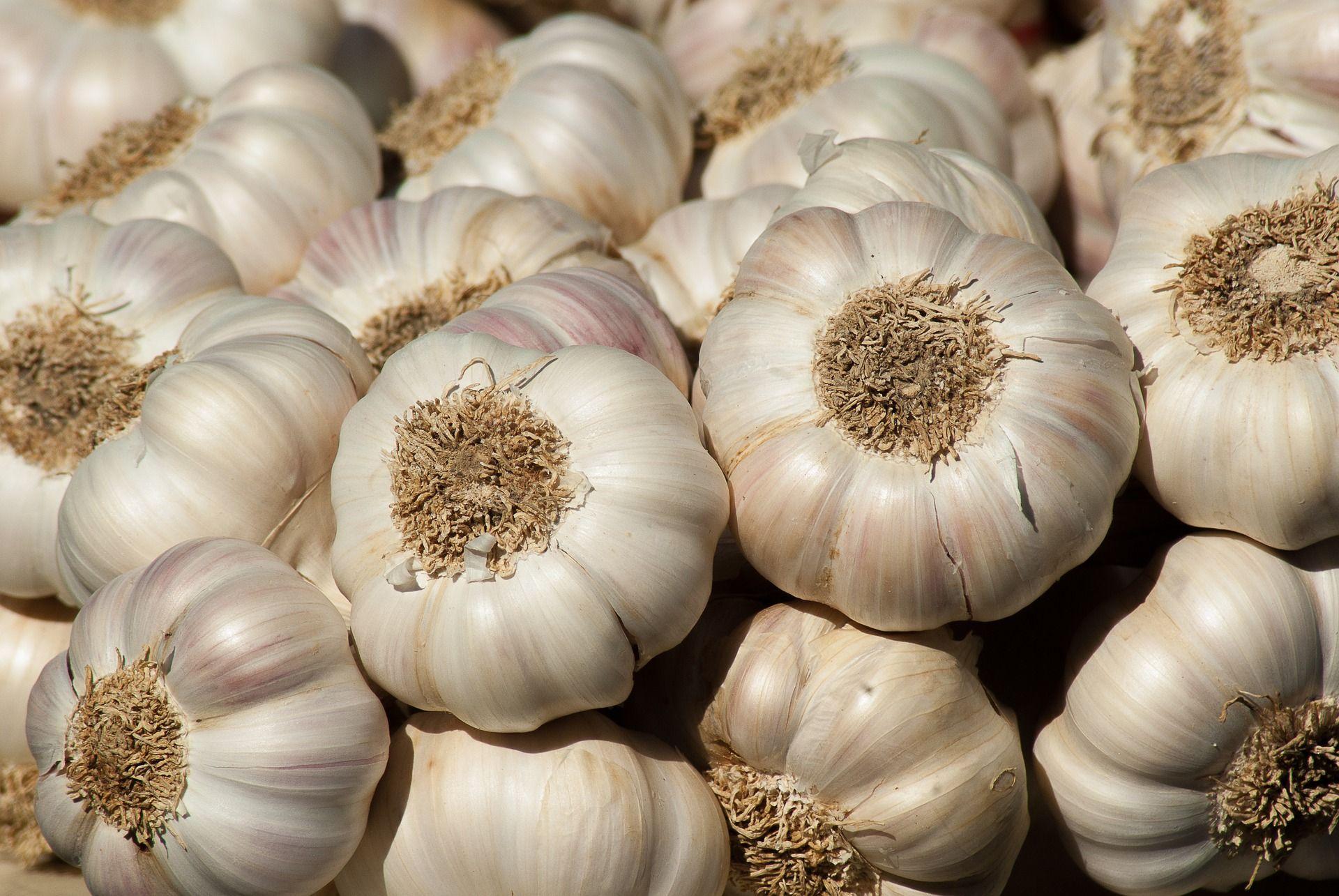 Garlic Garlic bulb, Harvesting garlic, Garlic