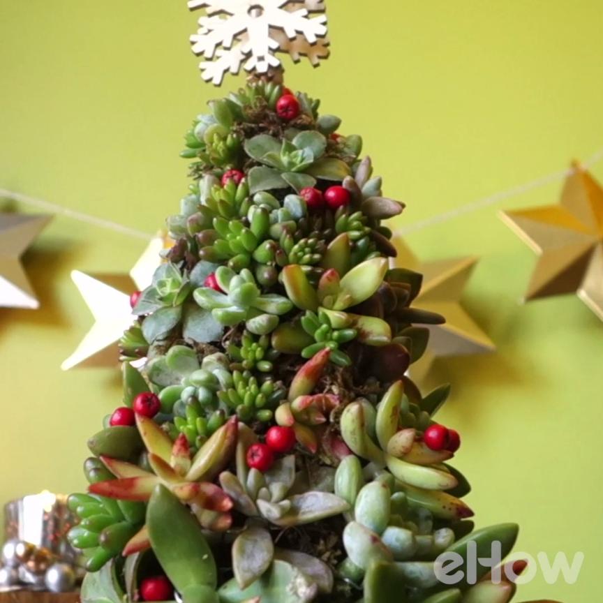 Create A Living Succulent Christmas Tree Tutorial