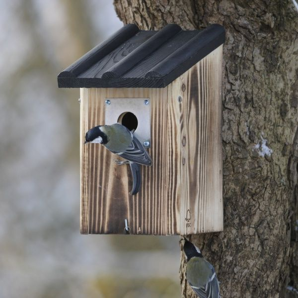 Pin By Jeff Gandin On Details In 2020 Nesting Boxes Bird House