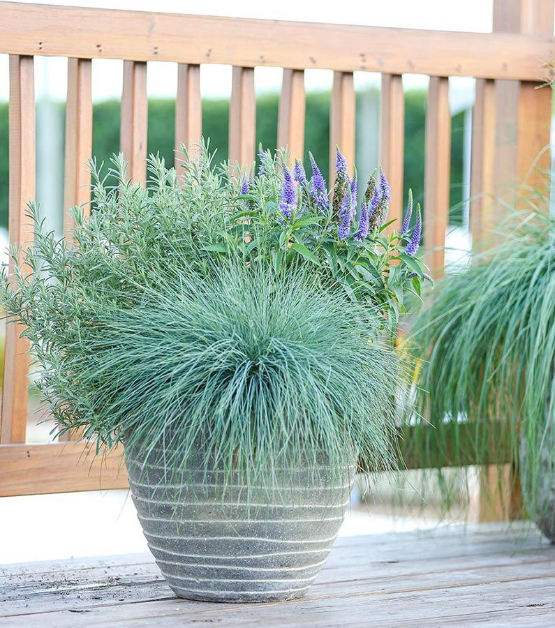 Captivating Perennials In Pots! From Garden Smart · House PlantsContainer ...