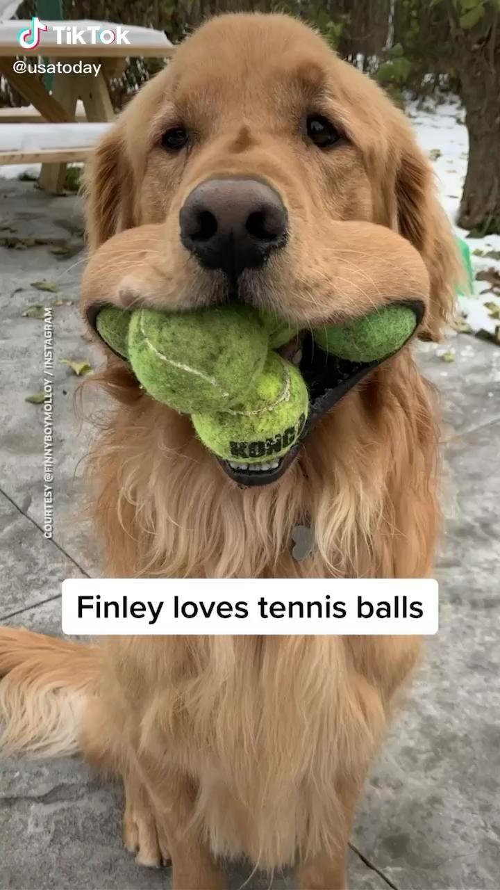 That's a whole chipmunk #catdog #cuteanimals #funn