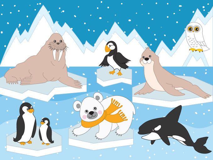 70 Off Sale Arctic Animals Clipart Digital Vector Arctic Winter Ice Owl Polar Animals Clip Art Clipart Vec Polar Animals Arctic Animals Animal Clipart