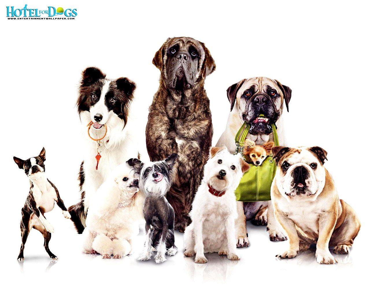 Dogs Wallpaper desktop download wallpaper of animals | download wallpaper