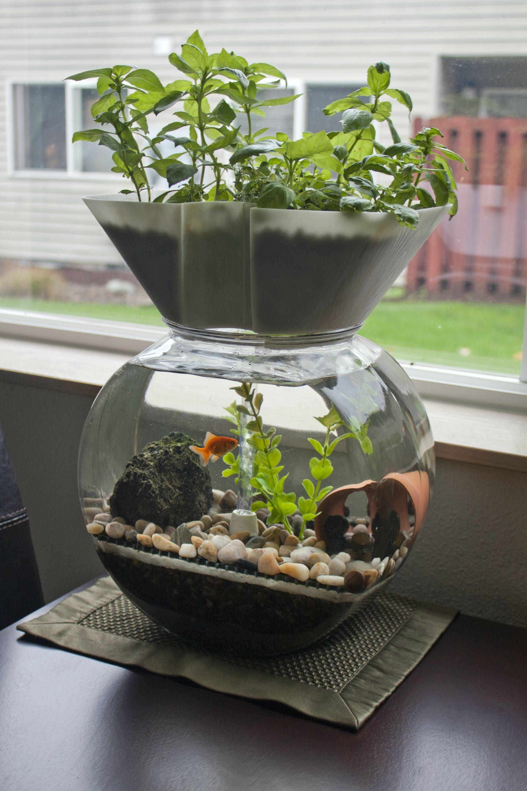 I invented this the goldfish garden self cleaning for Growing plants with fish