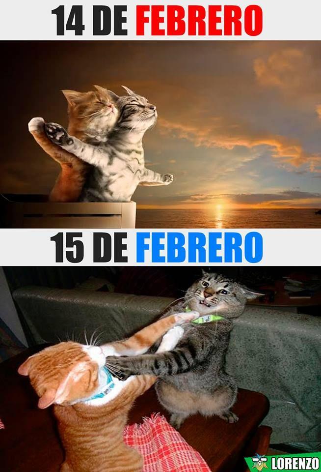 14 De Febrero Humor Divertido Sobre Animales Memes Divertidos Humor Divertido