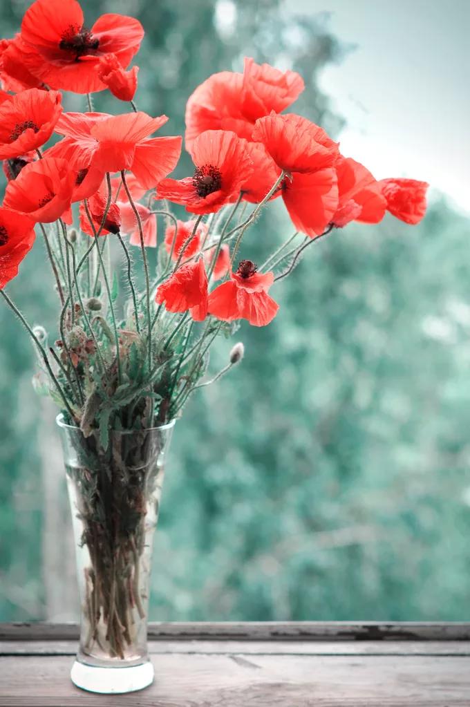 Wie Mohn Und Sonnenblumen Langer In Der Vase Halten Fensterfolie Sichtschutz Mohnblume Und Vase