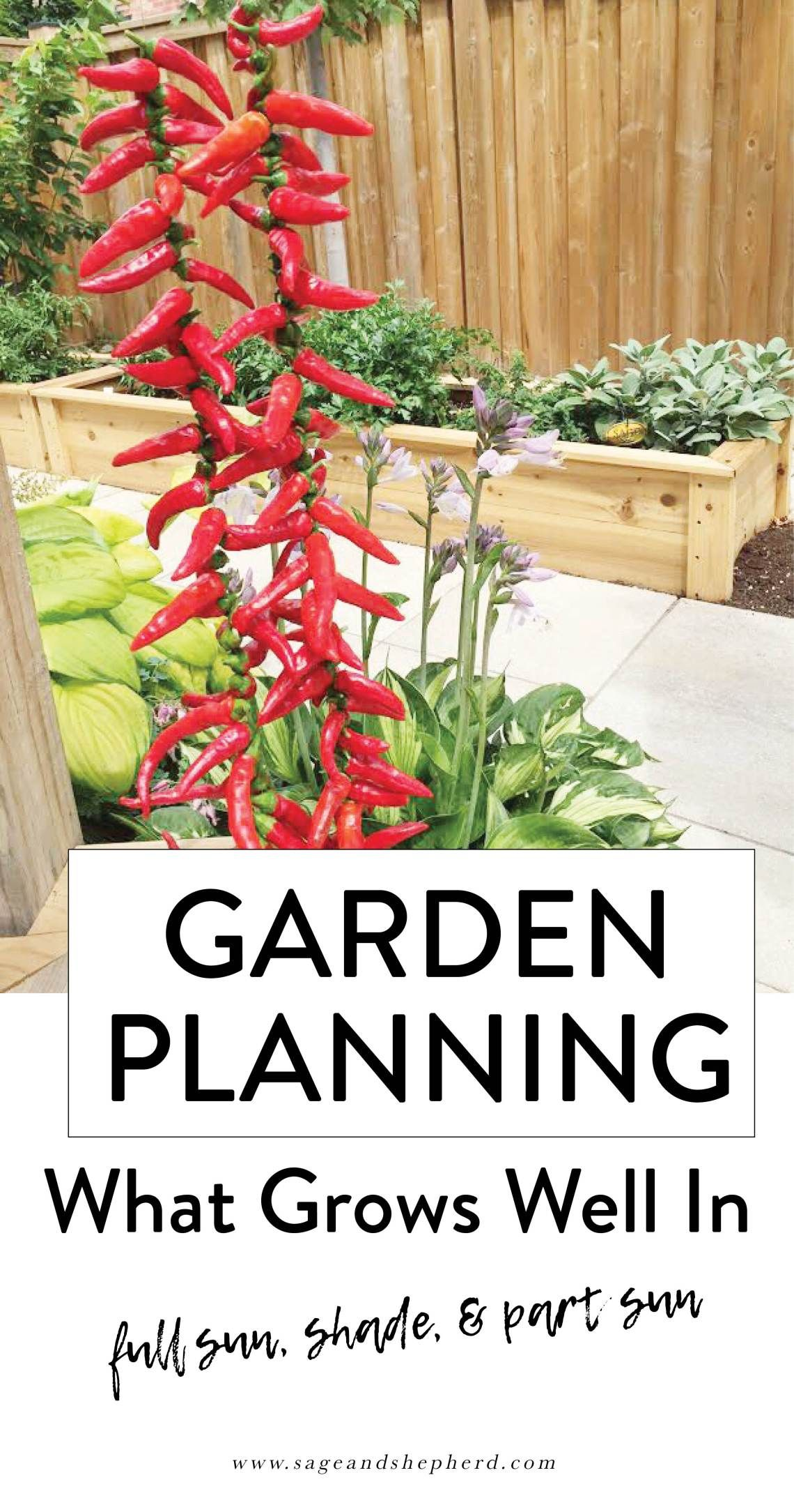 Planning Your Vegetable Garden – What Grows Well In Full 400 x 300