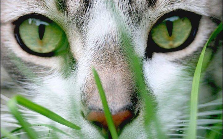 Green Eye Kitty