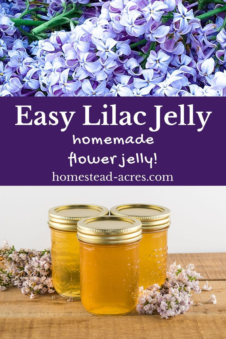 Lilac Jelly: How To Make Lilac Flower Jelly