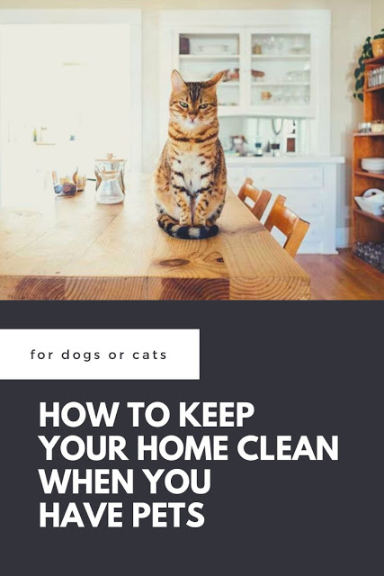 How To Keep Your House Clean When You Have Pets In 2020 Pet Safe Cleaning Clean House Pet Cleaning