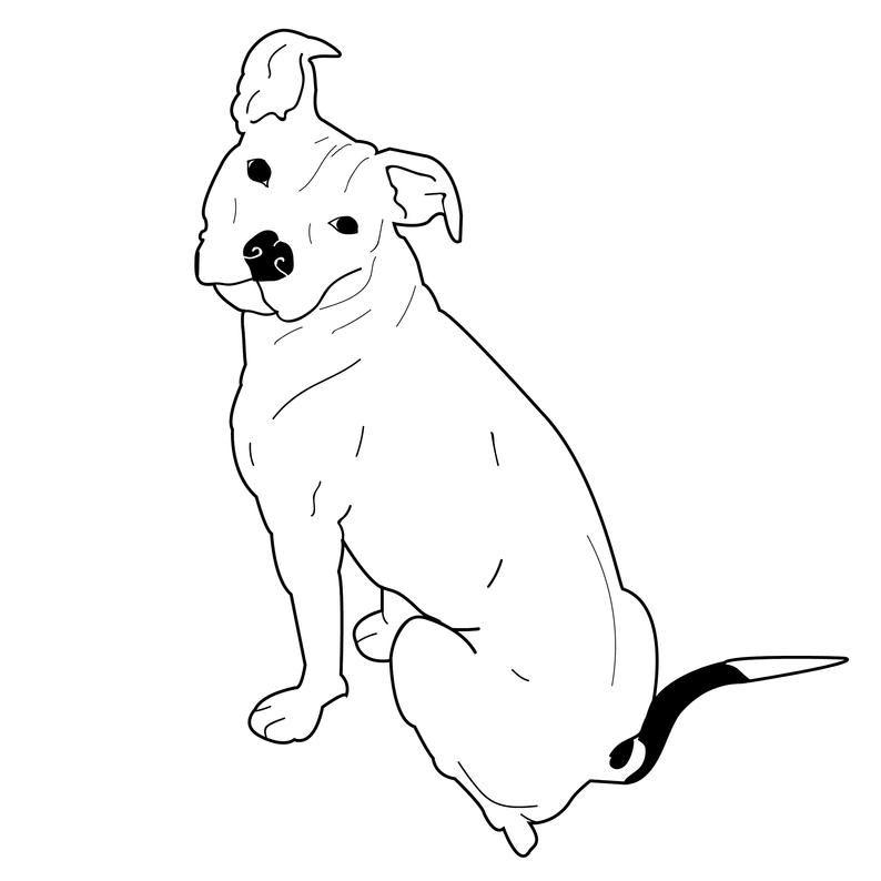 Floppy Ears Pitbull Vector Am Staffordshire Dog Illustration Eps Cute Animal Png Downloadable Clip Art Svg Dog Design Art Pitbull Drawing Dog Drawing