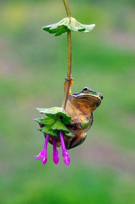 Amphibian Cirque de Soleil! This is how fairy tales begin.