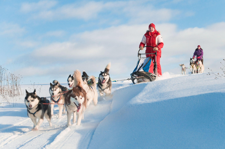 #dog #sleigh #zolux