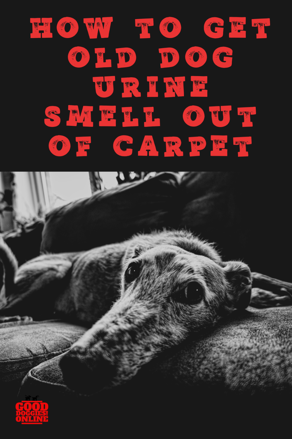 How To Get Old Dog Urine Smell Out Of Couch