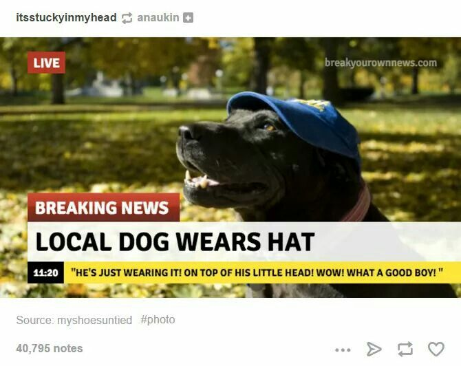 99bb88dc241670d4e3f5a8a96dcff3e9 local dog wears hat quotes and randomness and such and stuff and