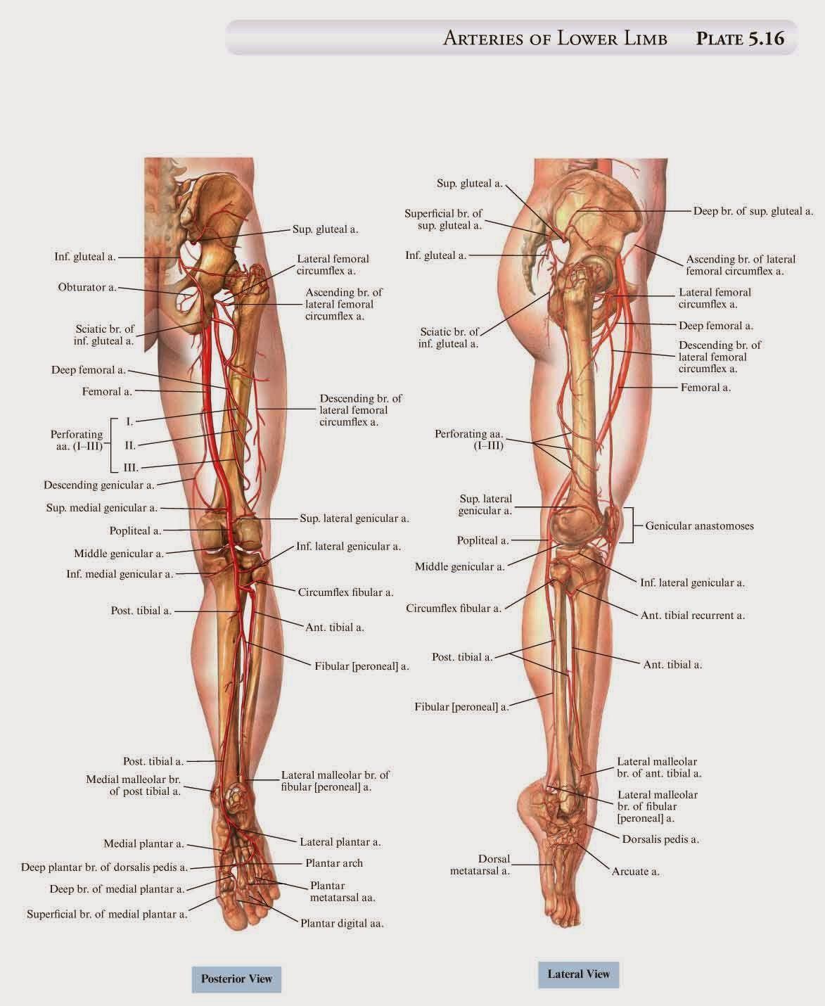 Anatomía de las artes marciales | martial arts | Pinterest | Artes ...