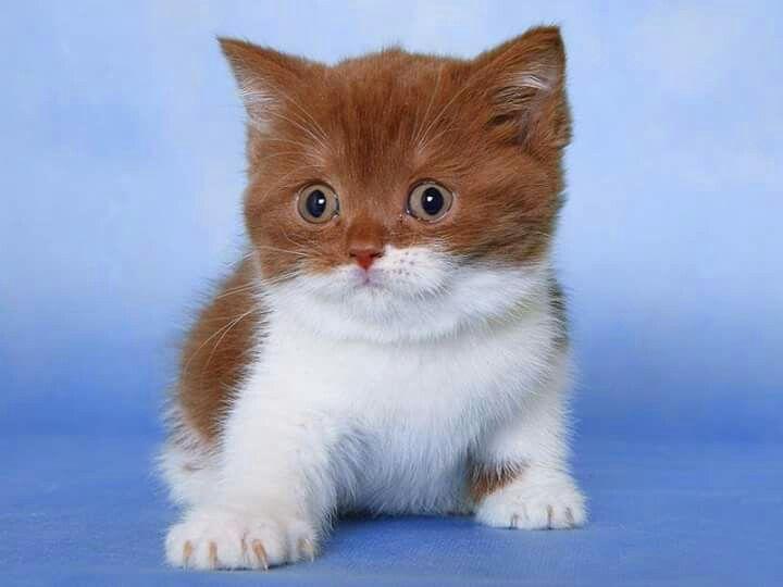 Savannah Cats Baby Kitty Nice Color Google Posts Grey Wallpaper Kittens