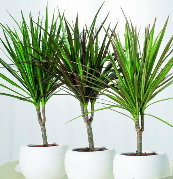 Grünpflanzen Green Plants Zimmerpflanzen: Sorgen Sie Für Ein Gesundes