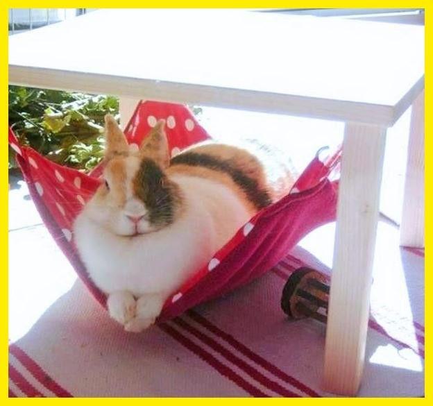 Kleintiere Hangemattengestell Mit 1 Hangematte F Kaninchen Ein Designerstuck Von Lazzyy Bei Dawanda Kaninchen Kaninchengehege Kleine Tiere
