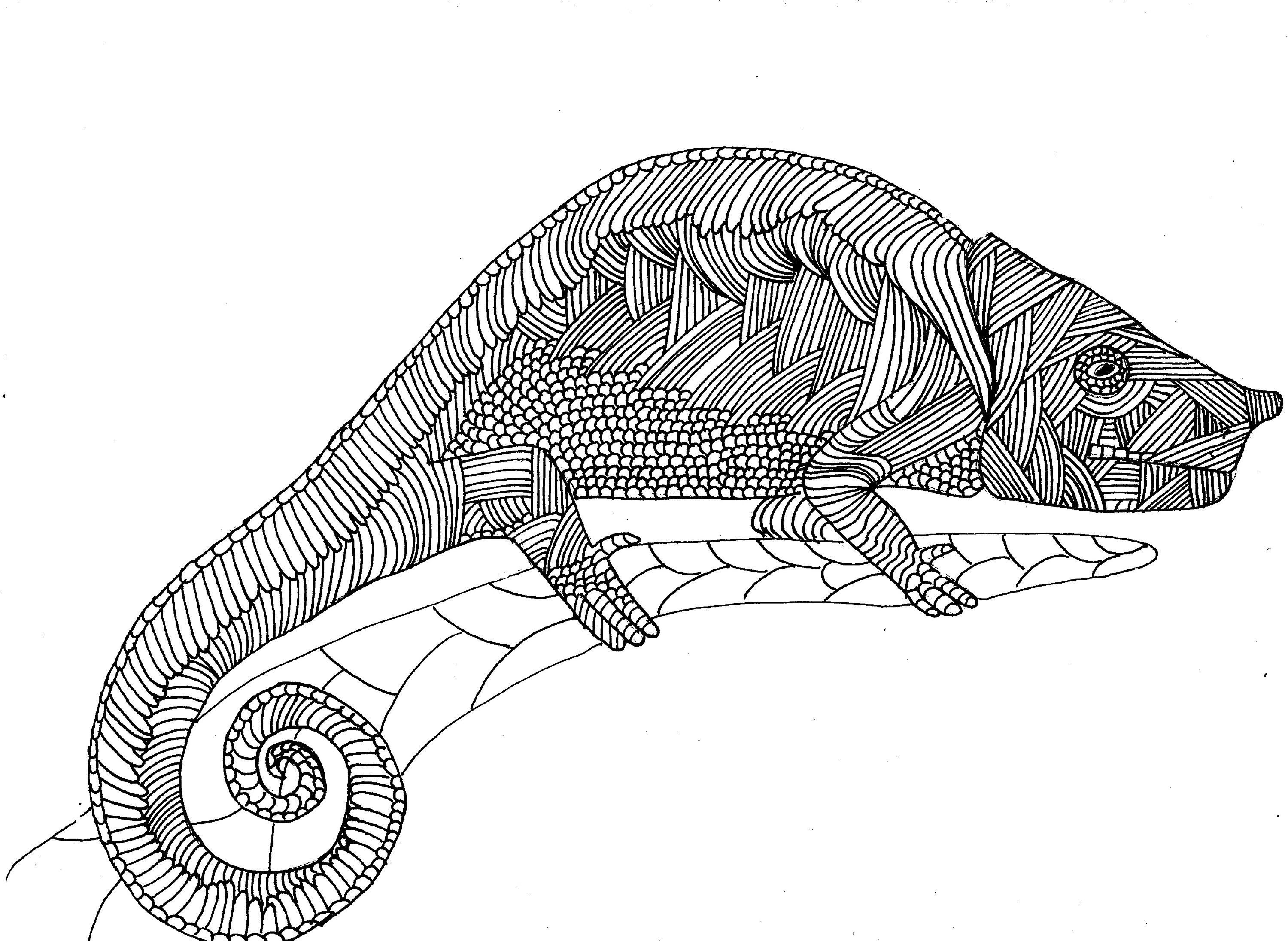 Chameleon Colouring page, digital product, adult colouring