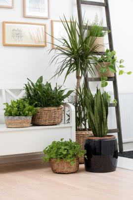 Kwiaty W Mieszkaniu Fot Flora Dania Wall Planter French Country Garden Wall Planters Indoor