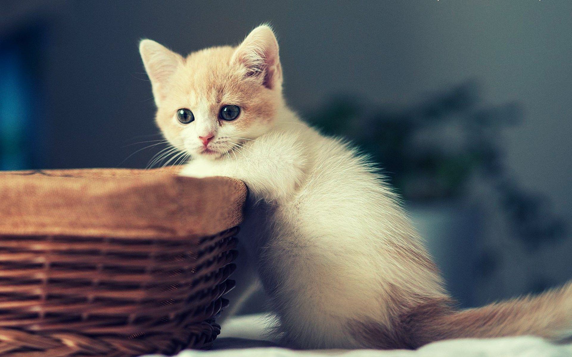 Girly Purple Desktop Background Wallpaper Abstract Wallpaper Cat Ages Cat Care Kittens Cutest
