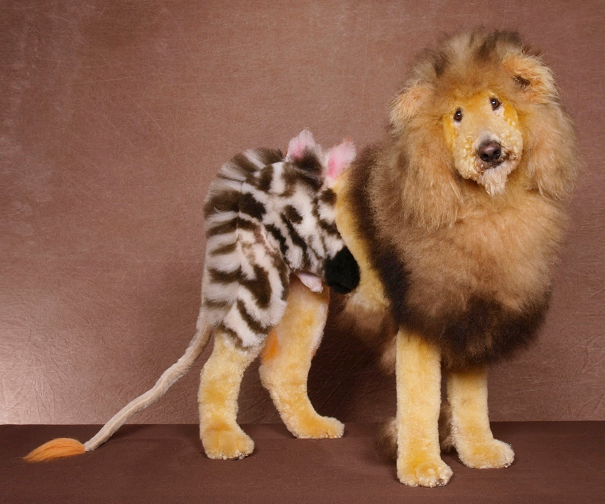 dyed dog | How to dye your dog like a lion, tiger or bear (oh my ...
